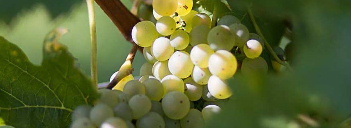 Weinbau Eder